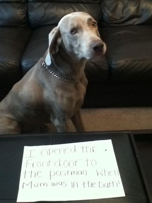 100 Best Dog Shaming Moments photo Eavie Porter's photos