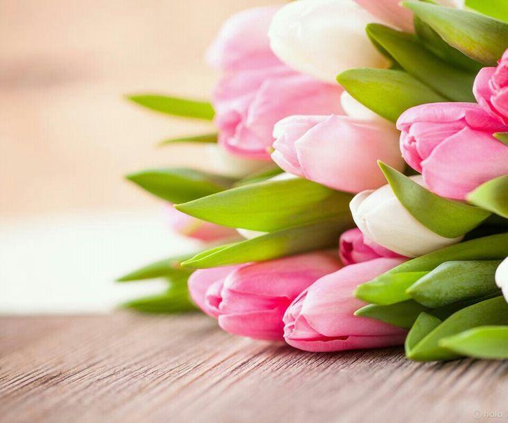 Cantares 2:12 Se han mostrado las flores en la tierra, El tiempo de la canción ha venido, Y en nuestro país se ha oído la voz de la tórtola. ♔