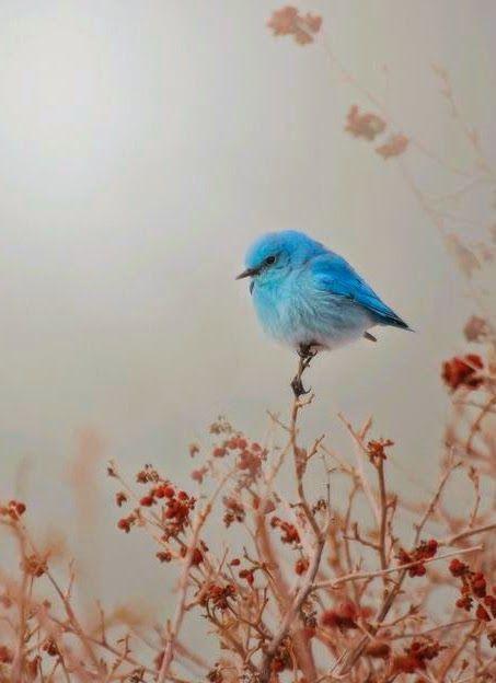 Blue Mountain Mist bird