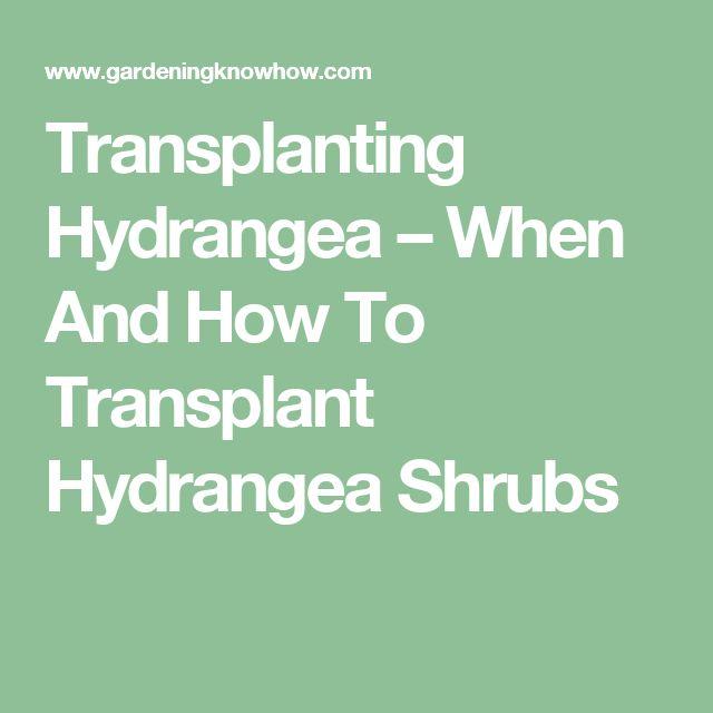 Transplanting Hydrangea – When And How To Transplant Hydrangea Shrubs