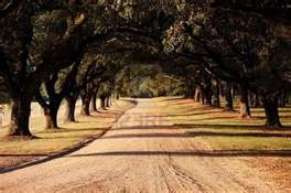 Driveway To Old Southern Plantation Home In Louisiana. Royalty Free ...