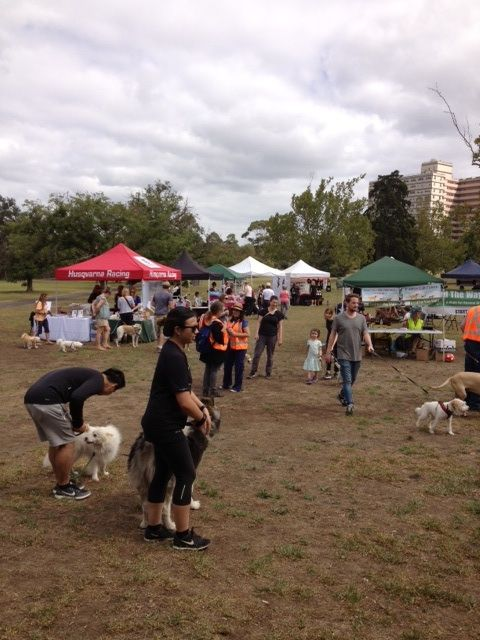 It was a beautiful day on Sunday and Yarra Bend Park had never seen some many happy, loved and healthy dogs... Thank you to all the volunteers who manned booths and spread the word about re homing.