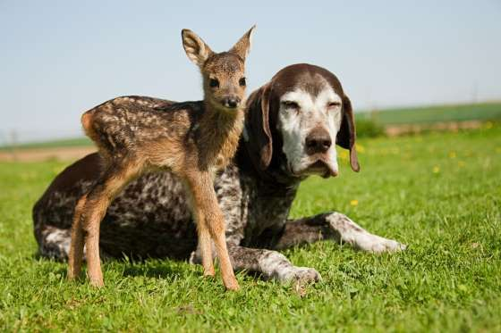 Fawn And Dog Sitting On Grass - Image Source/REX/Shutterstock