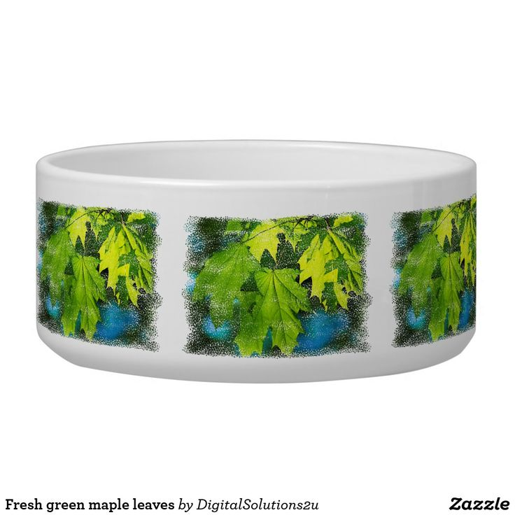 Fresh green maple leaves bowl