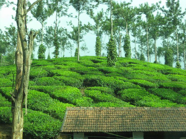 Munnar in Kerala