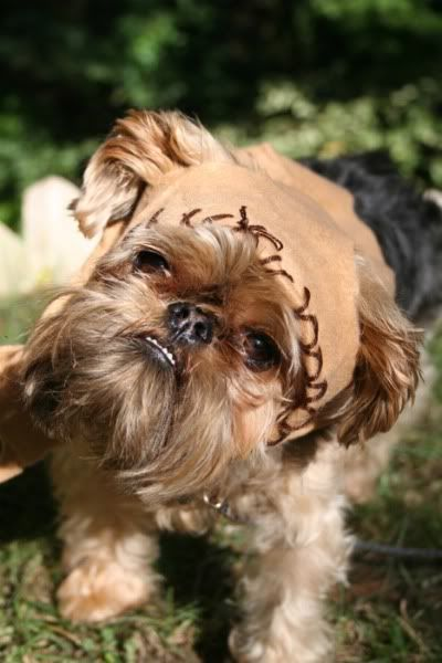 Cody better run faster cause Mama just found his 2011 Halloween costume.  Can you say Ewok;)