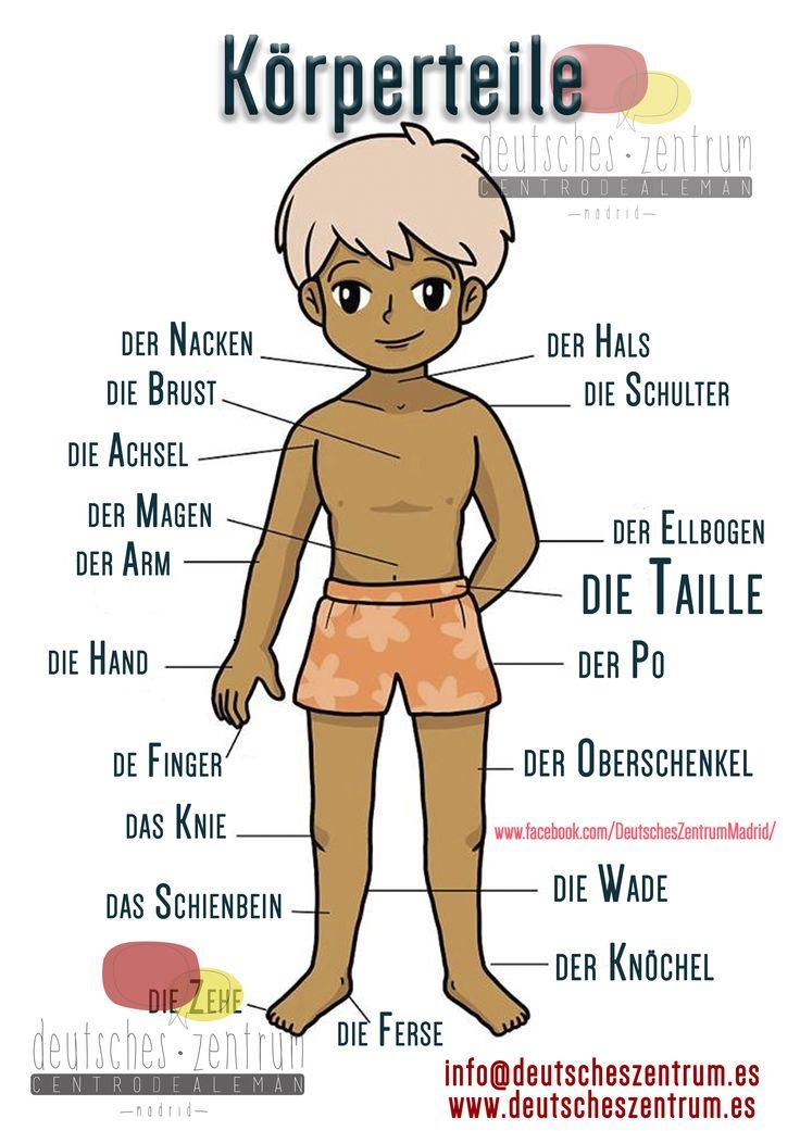 Körperteile Deutsch Wortschatz Grammatik Alemán German DAF Vocabulario