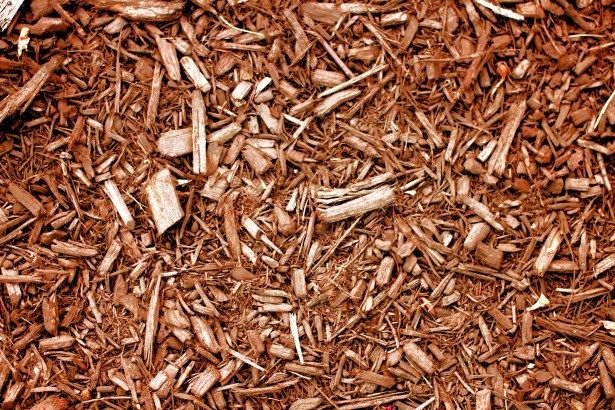 Green Grandma: Free wood chip mulch delivered to your house? There's an app for that!