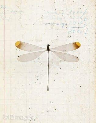 emma lamb: winged things...