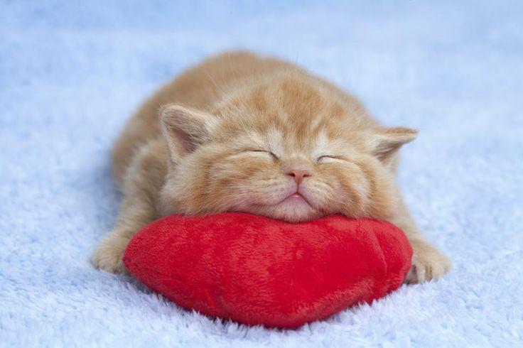 原点回帰!ただただ無防備に眠る子猫を集めたらまごう事なき可愛さでした22選
