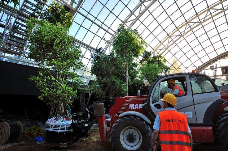 Aménagement de la serre tropicale du parc zoologique de Paris   Crédit photo : FG Grandin - MNHN #parc #zoo #tourisme #Paris #Vincennes #loisir