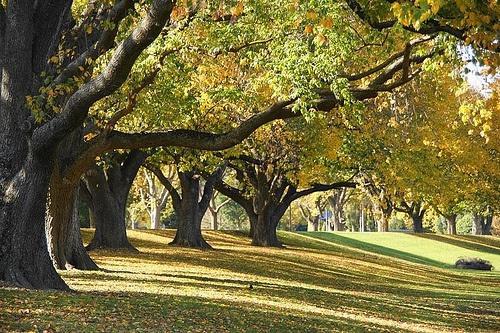 Autumn Trees Manawatu River Palmerston North New Zealand | Flickr - Photo Sharing! Dominic Scott Photography | Jeannette Scott