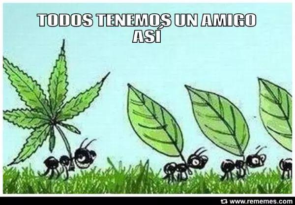 Los mejores memes de Marihuana | Cogollando