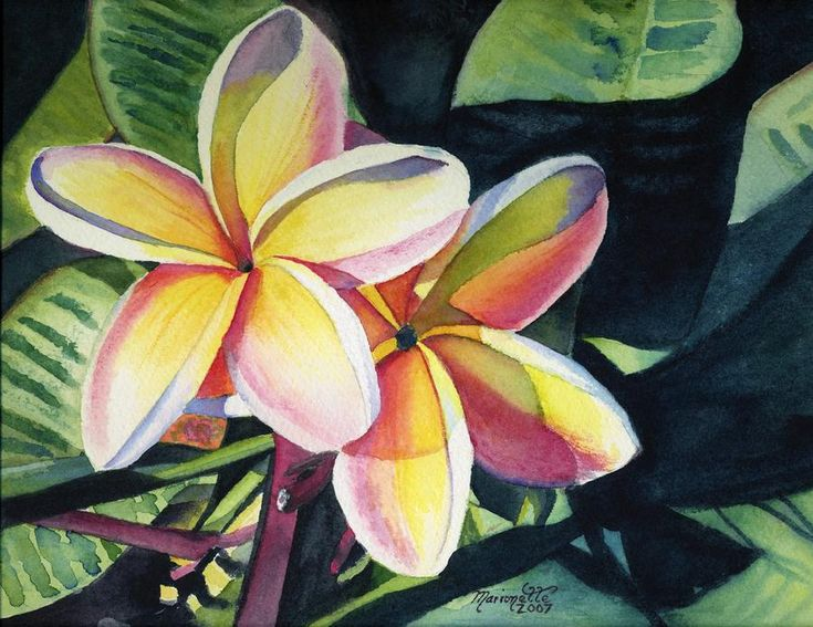 17 Best images about Frangipani love :) on Pinterest ...