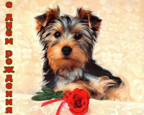 Поздравление с днем рождения, Собака
