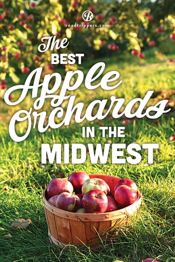 Nothing beats the taste of homemade cider! Why not take a trip to one of these Midwestern apple orchards and experience it for yourself!