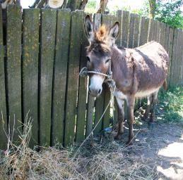 Our Friend, Donkey, Danube Delta, Romania at romanianexperience.wordpress.com
