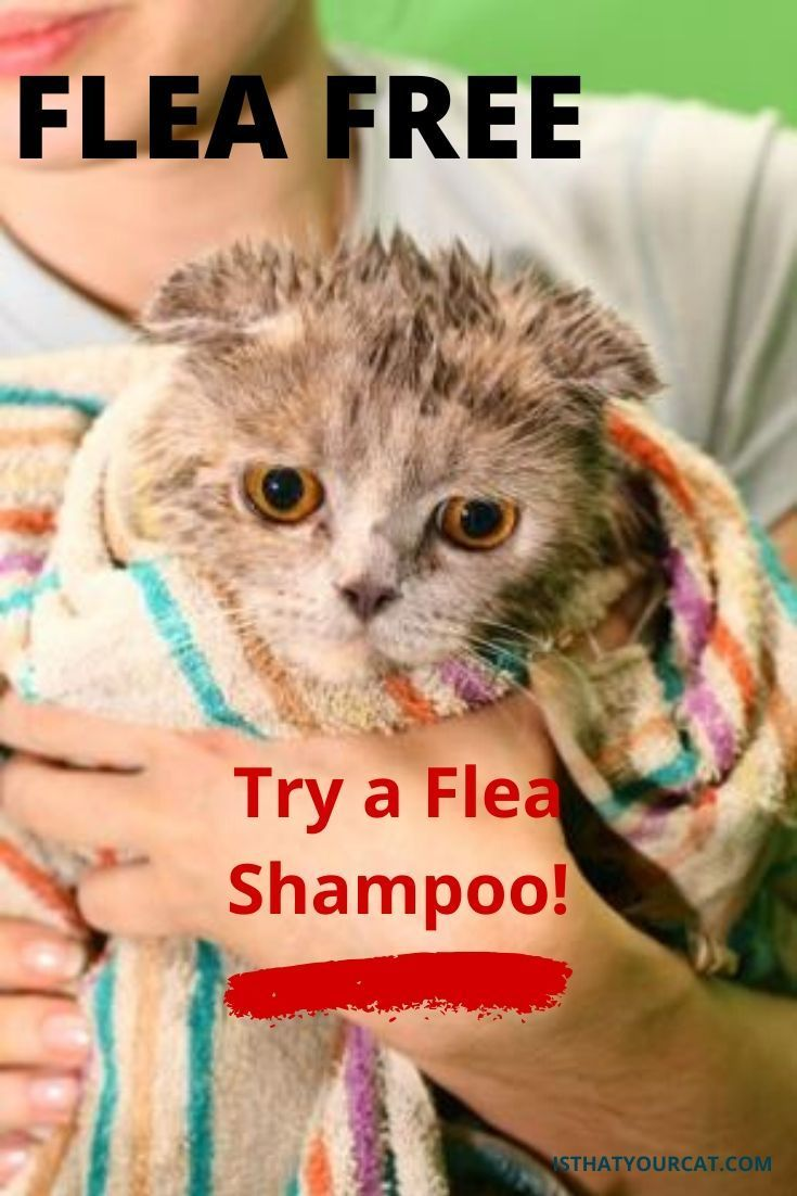 What Are The Best Flea Shampoos For Cats In 2020 In 2020 Flea Shampoo Cat Fleas Fleas