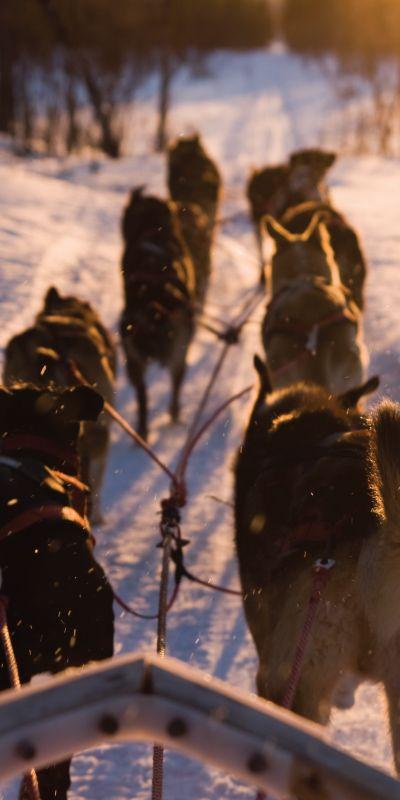 Når du vil gi bort en morsdagsgave som huskes er hundekjøring en spennende opplevelse! Man suser gjennom vinterdekt skog, trukket av ivrige hunder og det kreves ingen erfaring for å kjøre selv. Gi et gavekort på vinterens vakreste eventyr.