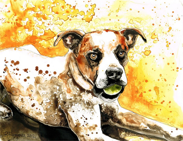 Dog portrait by Rachael Rossman