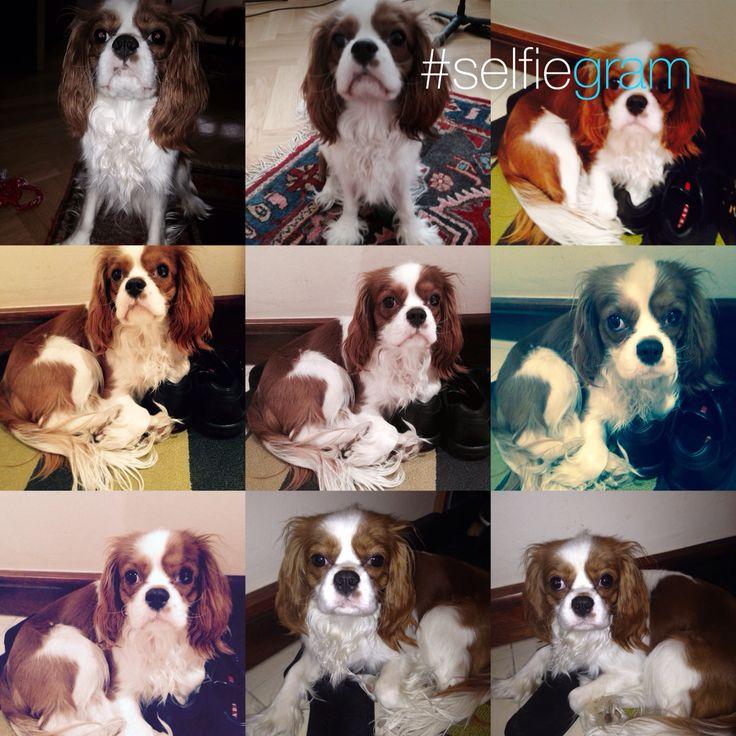 Můj Pejsek Charlie/My Dog Charlie(7.2.2015)