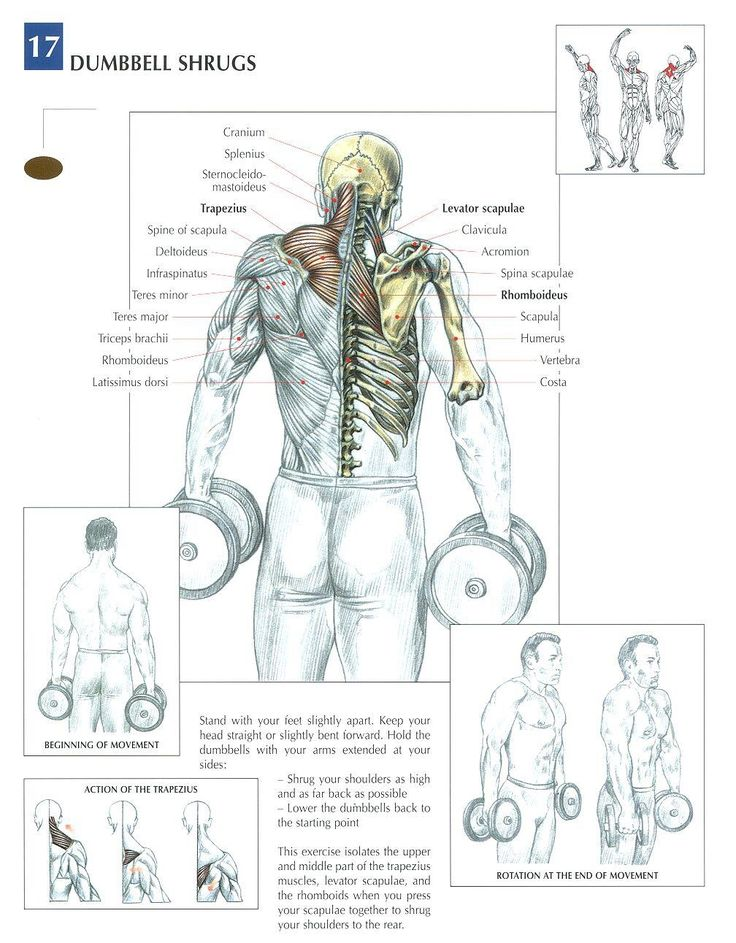 Dumbbell Shrugs ~ Re-Pinned by Crossed Irons Fitness