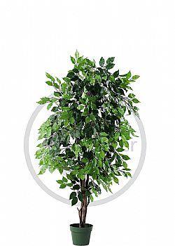 Διακοσμητικά δέντρα - Φίκος ''benjamini''