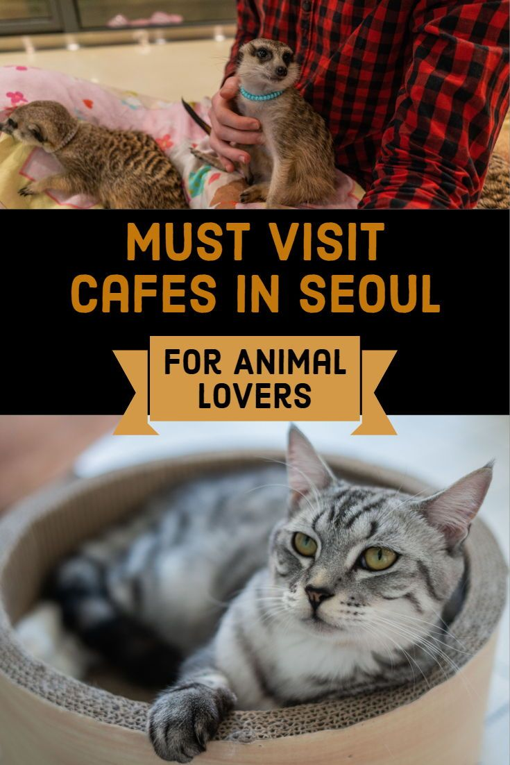 best places to date in seoul for animal lovers | travel bloggers