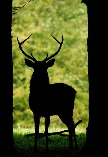 Red Deer Stag silhouette by Mrshutterbug.com, via Flickr