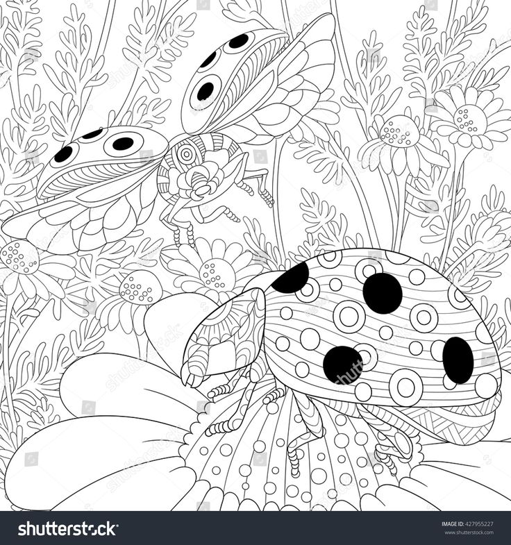 Stock Vector Of Zentangle Stylized Cartoon Flying Ladybugs And Daisy Flowers Hand Drawn Sketch For Adult Antistress Coloring Page T Shirt Emblem