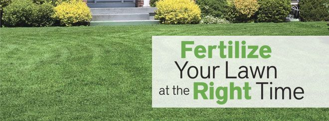 Advice / Fertilize your Lawn at the Right time/ Pike Nurseries