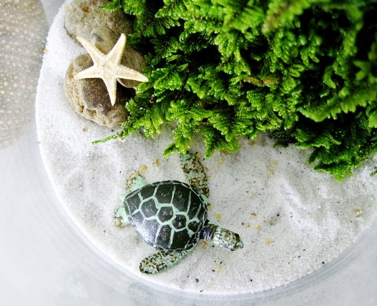 Sea Turtle Beach Terrarium Terrariums Succulents