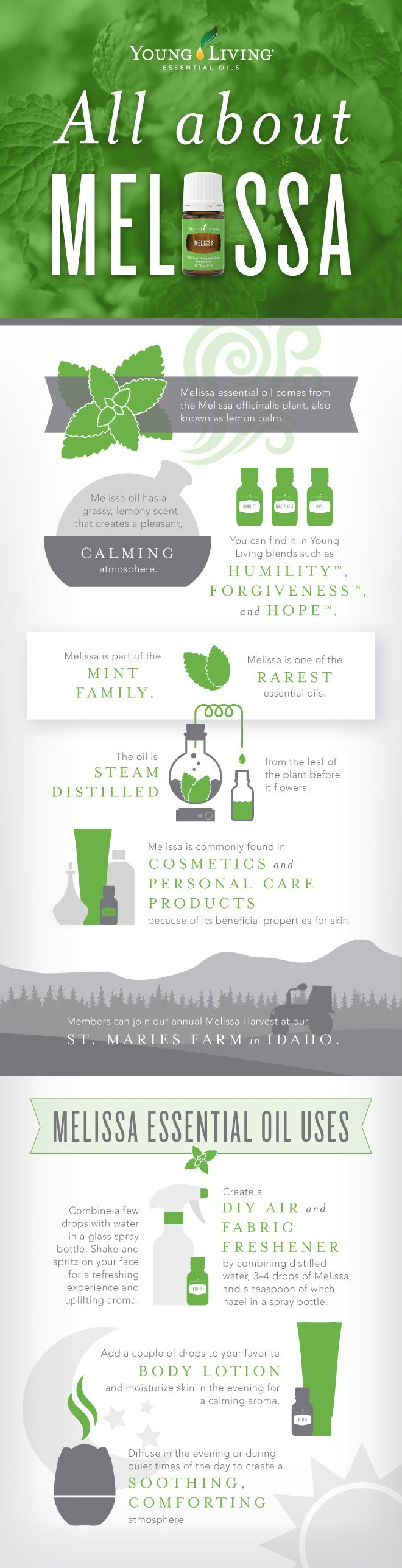 All About Melissa Essential Oil Infographic | WWW.THESAVVYOILER.COM