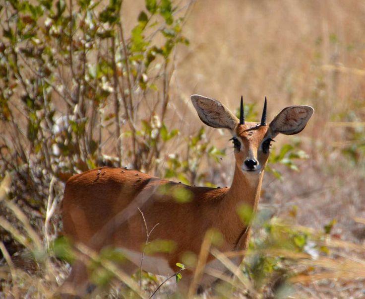 Trivelle in Botswana, via libera al fracking nel parco delle antilopi e dei ghepardi