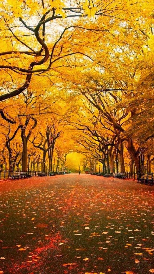 Central Park, New York - The Trees of Autumn. Yellow and Brown Leaves.