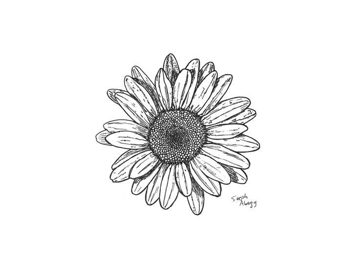 daisy drawing | daisy pen drawing and original photo tattoo