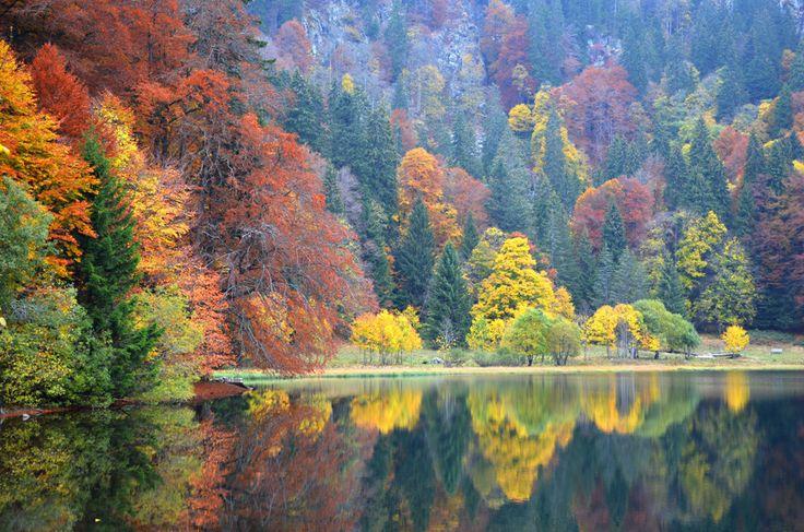 https://flic.kr/p/zS5aKT | Autumn, Feldsee, Black Forest, Germany