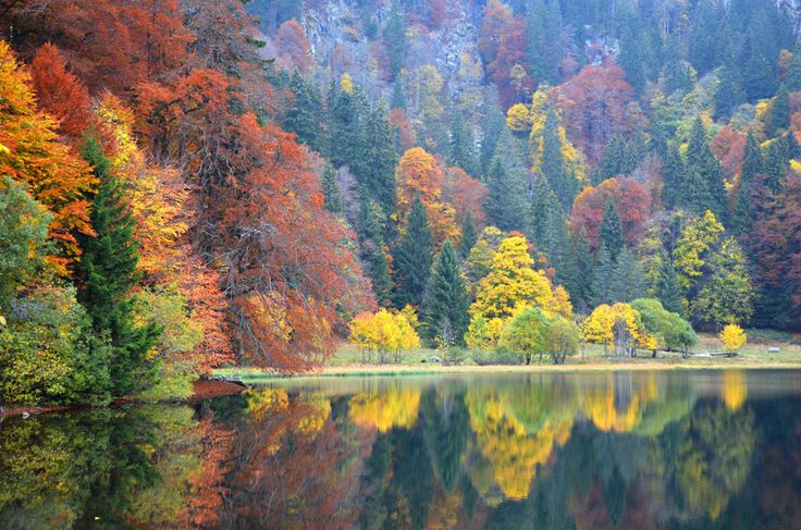 https://flic.kr/p/zS5aKT | Autumn, Feldsee, Black Forest, Germany