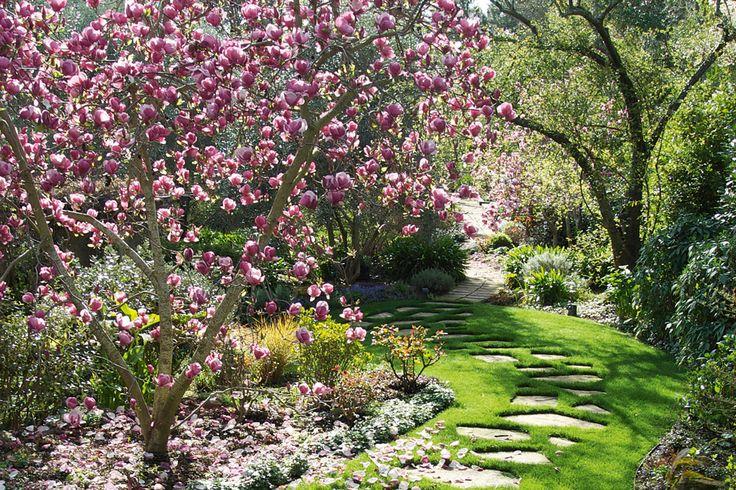 Growing Magnolias Made Easy Magnolia gardens, Magnolia