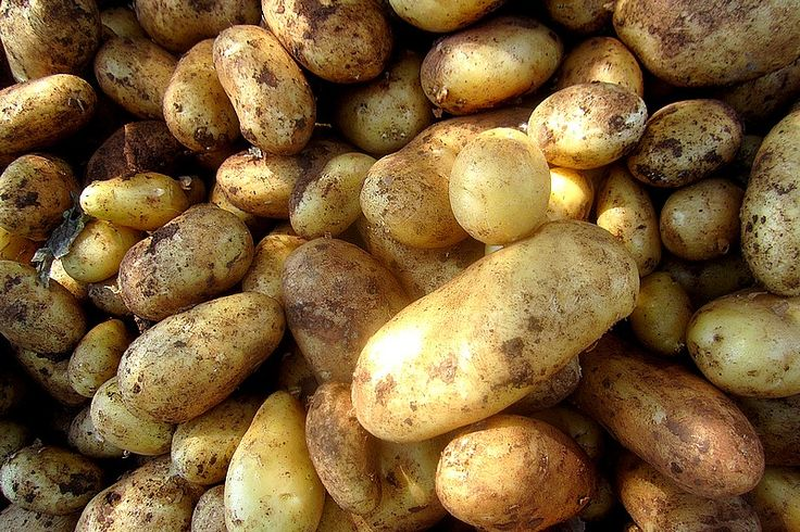La patata Salentina dal nome Tedesco