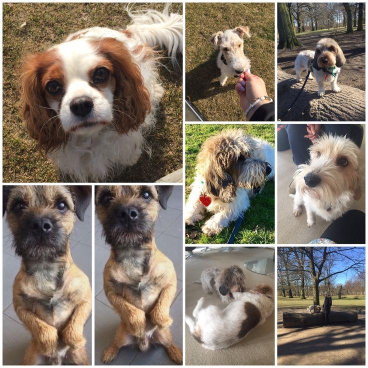 Ugens fantastiske fire hunde #2