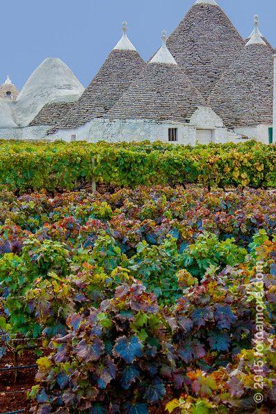 tasting wine and tasting food from PUGLIA Masserie, Locorotondo Puglia info: Vito Maurogiovanni guidaturistic@gmail.com cel: 0039 3498553678