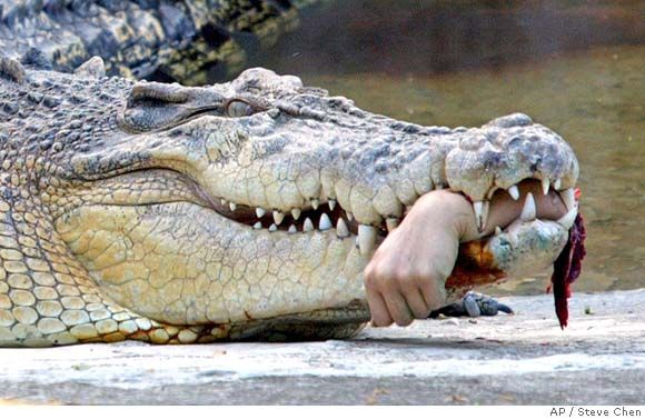 The saltwater crocodile: Australian, deadly, and depicted here with only very minor Photoshopping.
