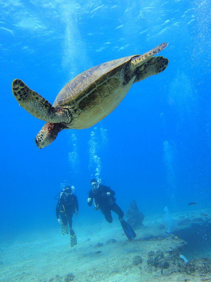 Scuba dive in Hawaii. Island Divers