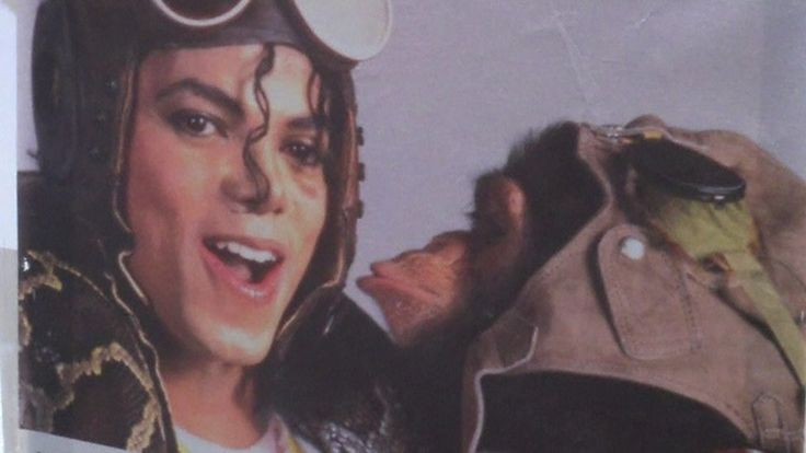 Michael Jackson's pet Bubbles sells artwork    A gallery is selling works by Bubbles and other primates to raise money for Florida's Centre for Great Apes.   http://www.bbc.co.uk/news/world-us-canada-40691091
