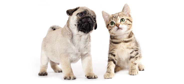 Discount Pet Supplies for your Dog or Cat