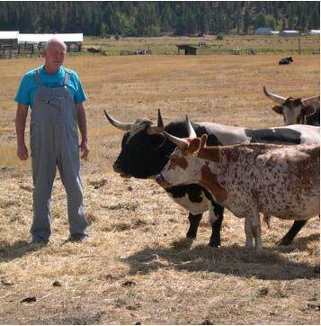 Micro-Mini Longhorn Cattle