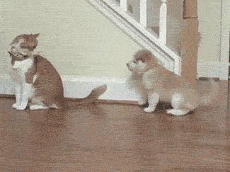 The puppy looks completely perplexed that the cat left (GIF)