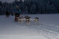 [Best] Help with huskies and more in Finnish Lapland - workaway.info