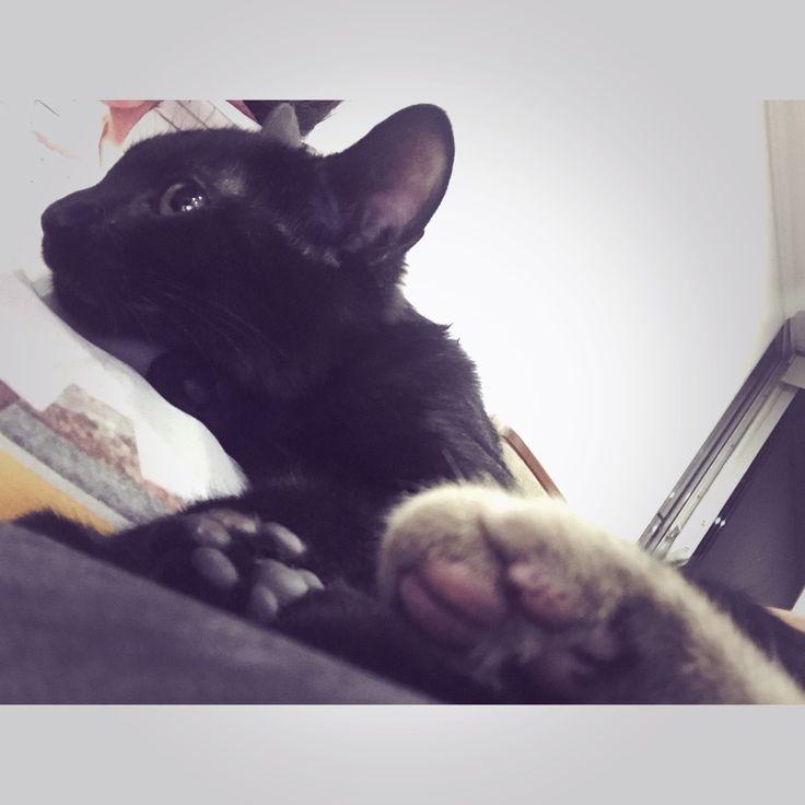Olivia y su pata percudida! 😻